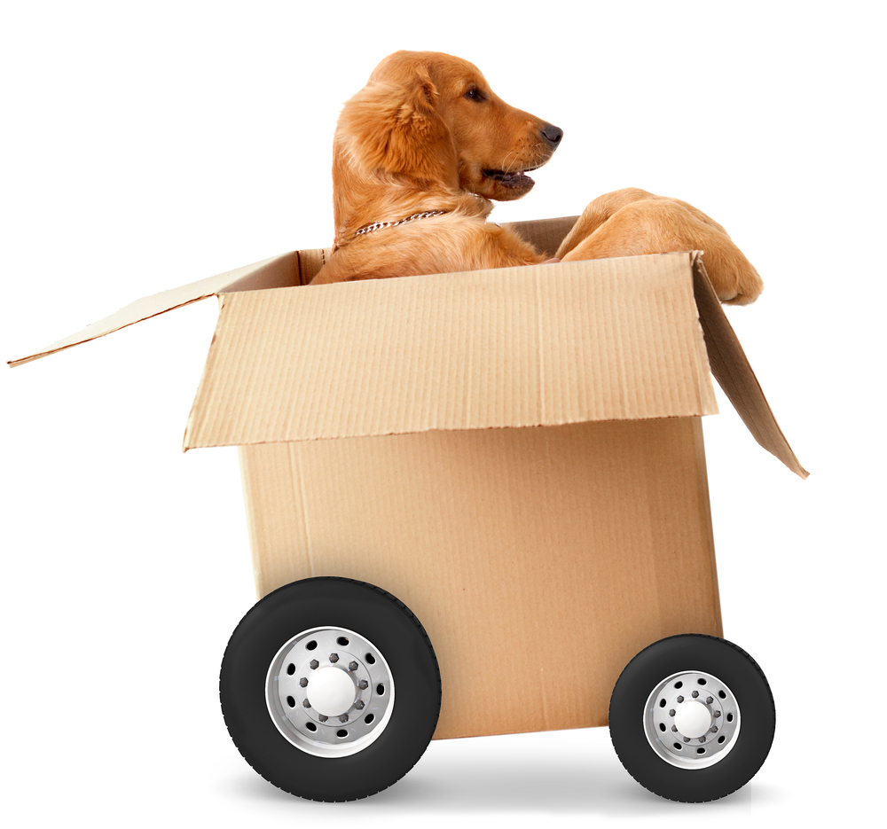 Dog in a car made of cardboard box - fast shipment concepts