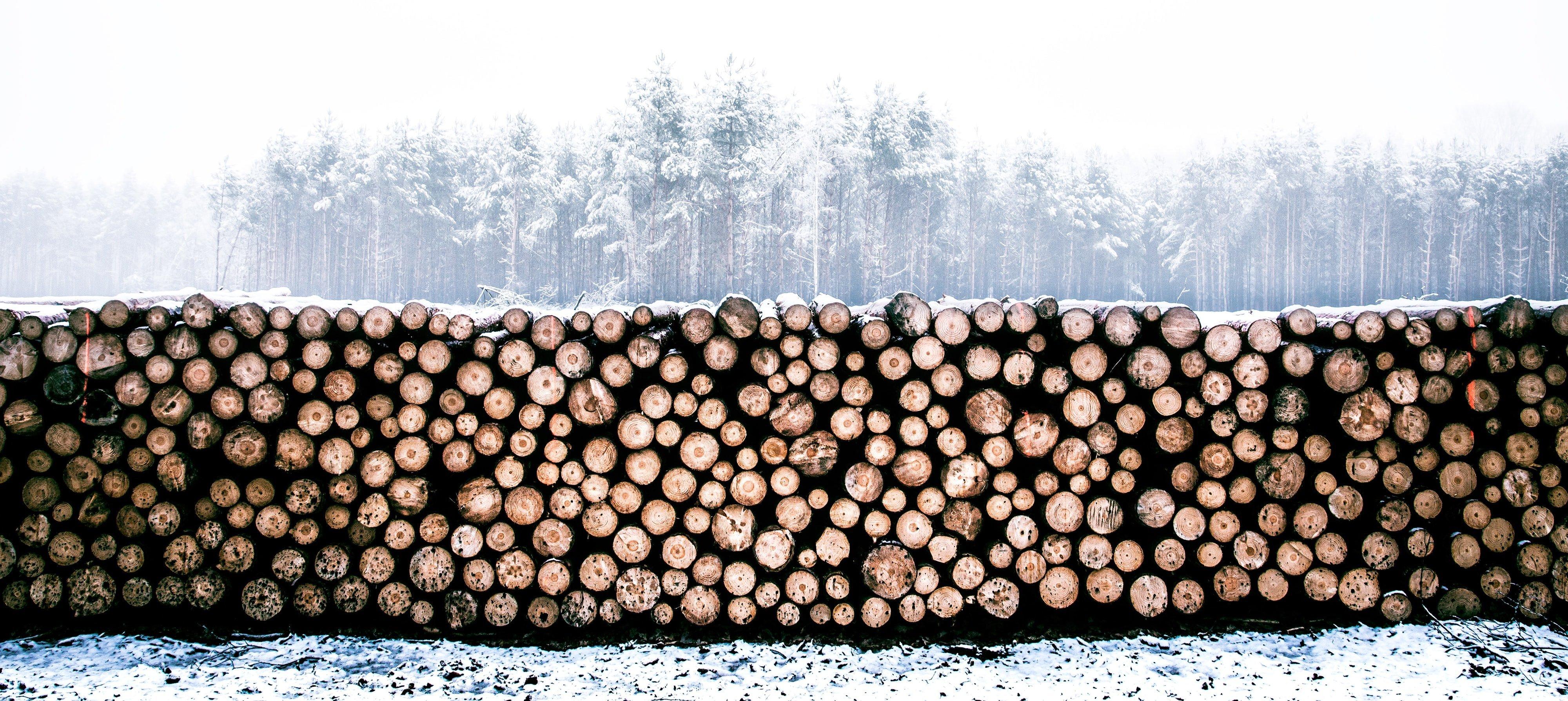 logging-unsplash